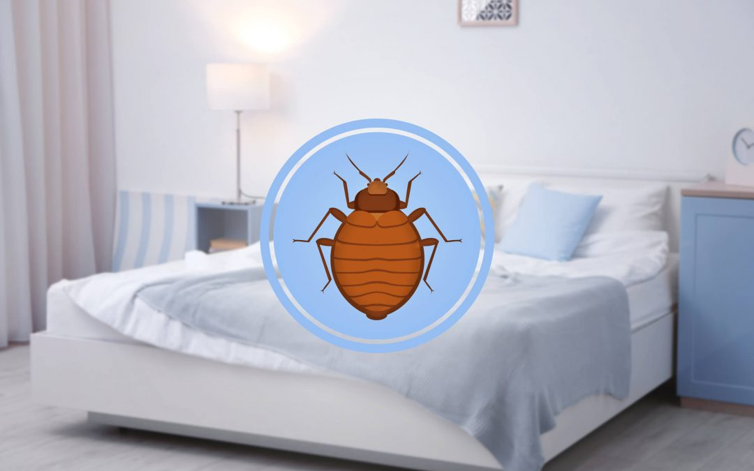 Taking The Stress Out Of Having Bed Bugs